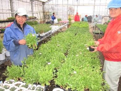 千代福祉会 障害者支援施設 菜園
